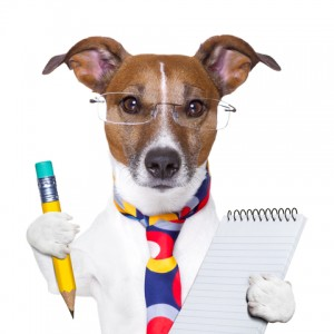 http://www.dreamstime.com/stock-images-secretary-dog-image28880214