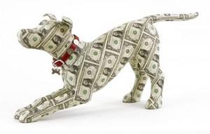 justine-smith-washington-money-dog